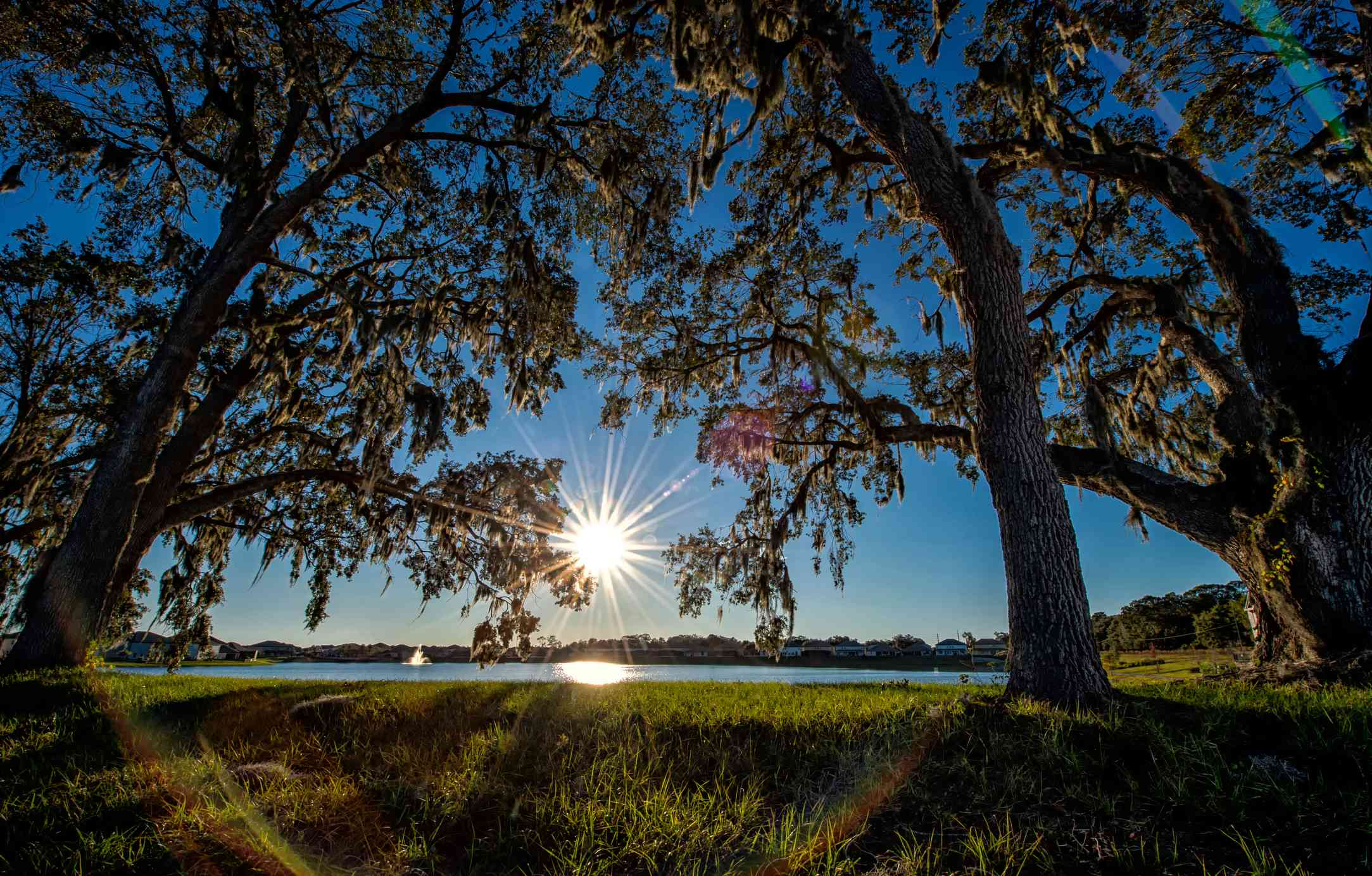 Tall trees backlit by the sun in Orlando, Florida