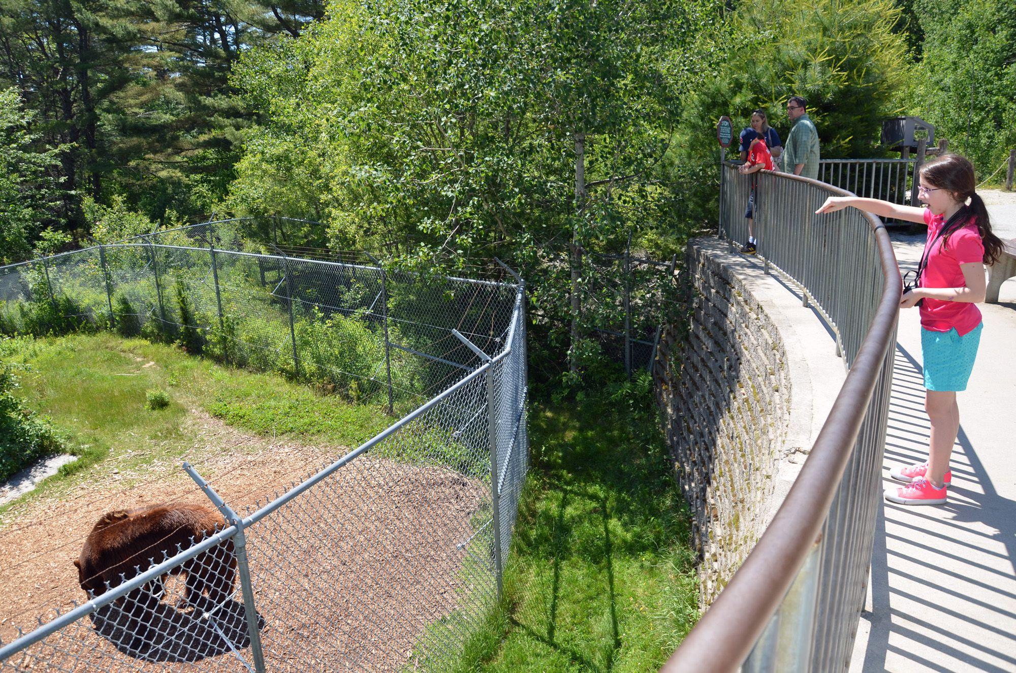 Feed the Bears - Maine Wildlife Park