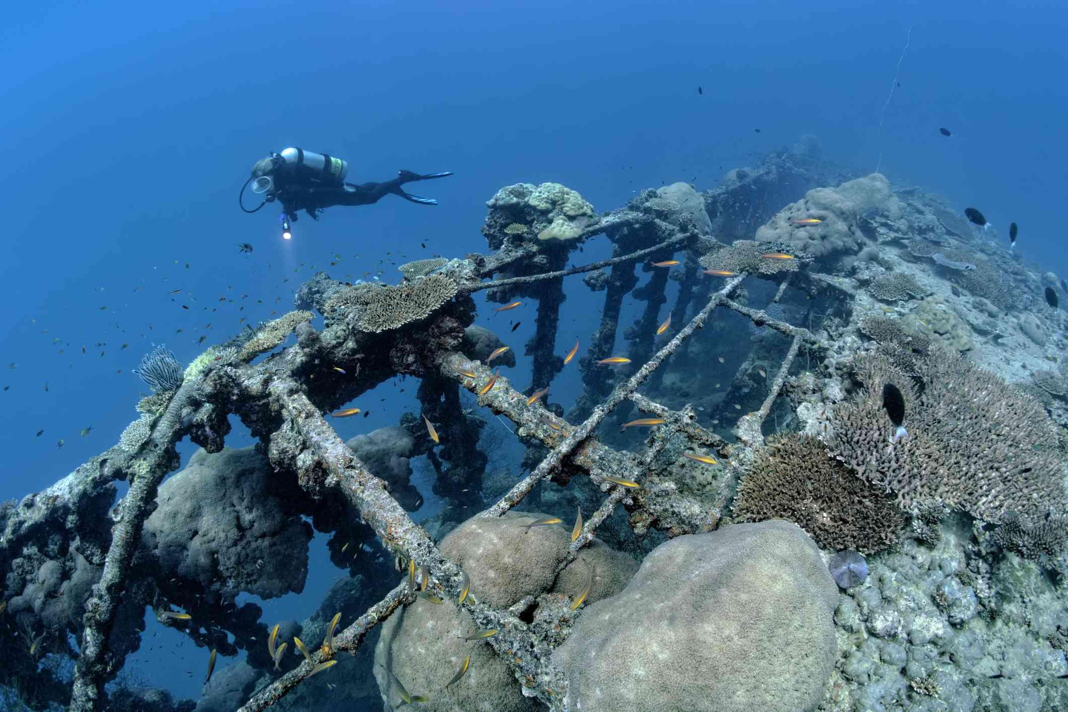 Diver near British Loyalty shipwreck