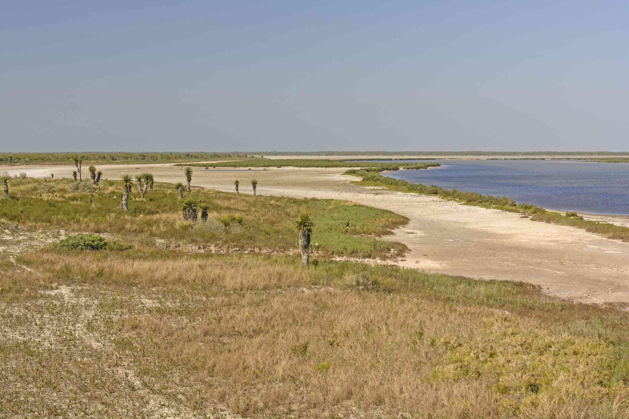 Laguna Atascosa National Wildlife Refuge