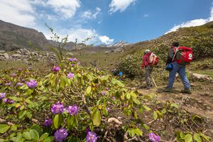 Friends hiking amidst rhododendrons flowers at Deo Tibba trek in Manali