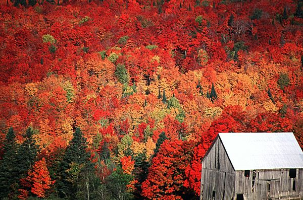 Fall foliage and old barn