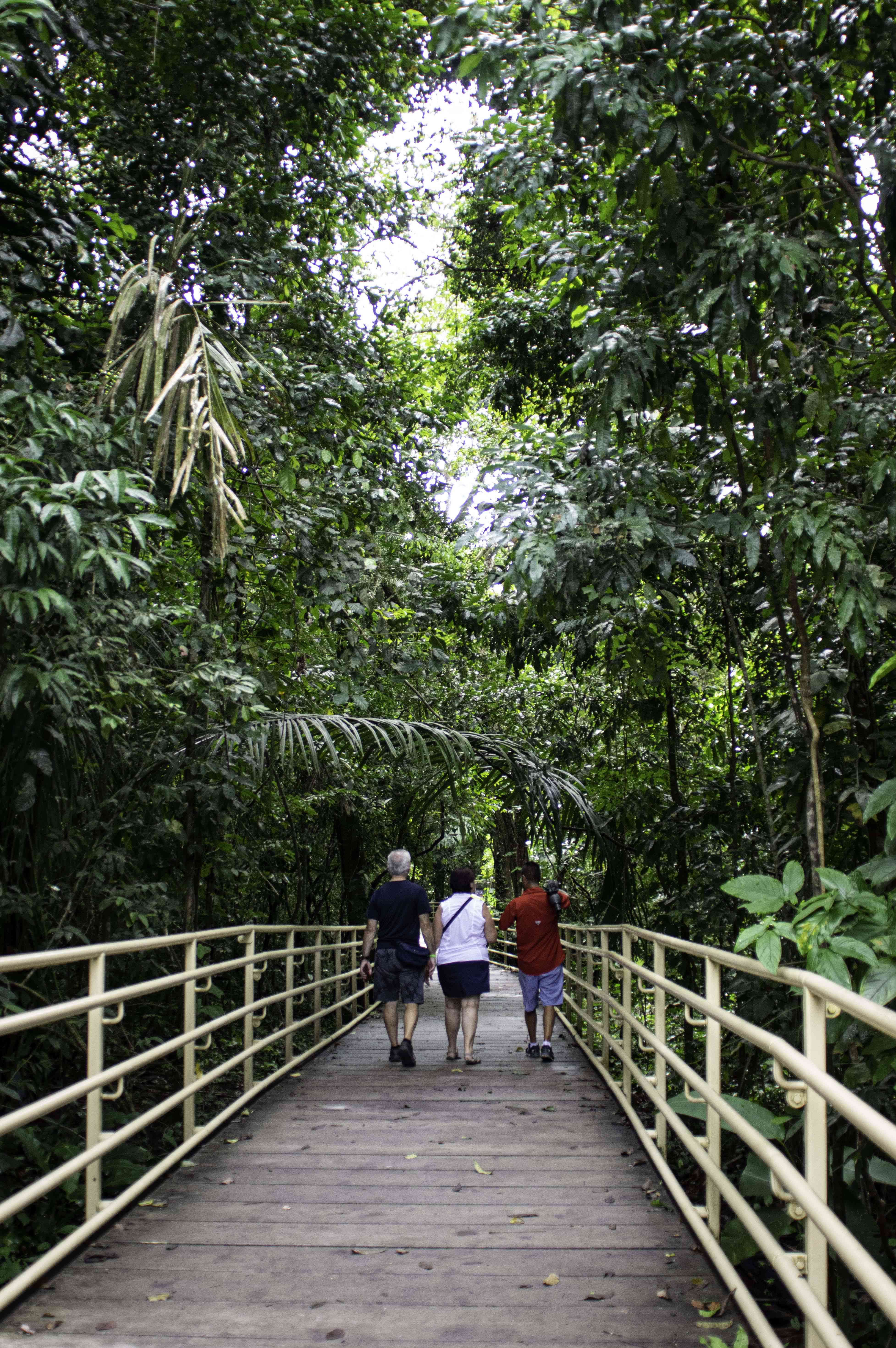 Walking through the national park in Manuel Antonio