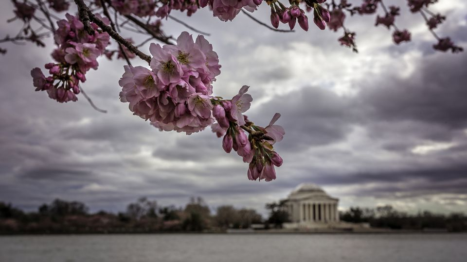 Spring in Washington DC