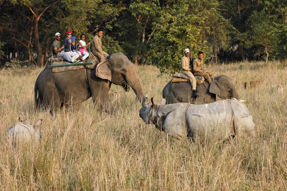 Tourists Elephant safari in Pobitora wildlife Sanctuary, Assam
