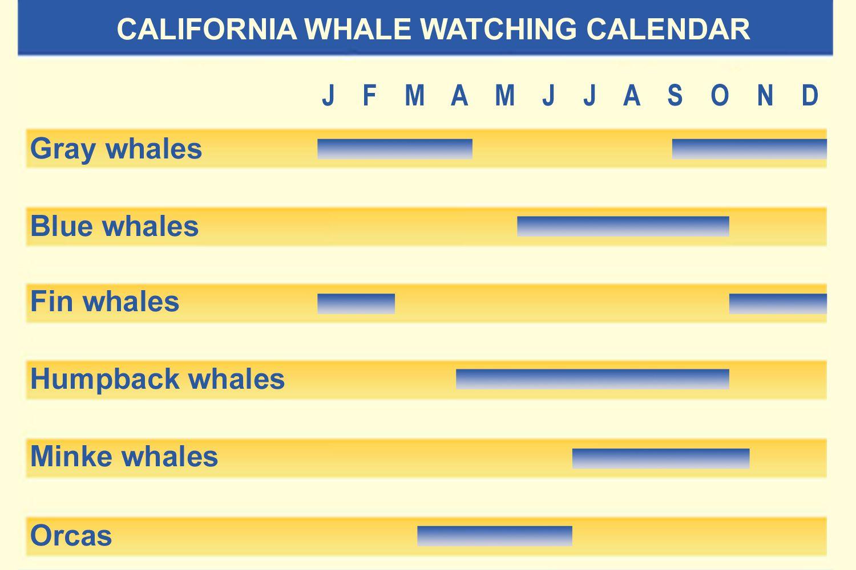 Calendario de observación de ballenas de California