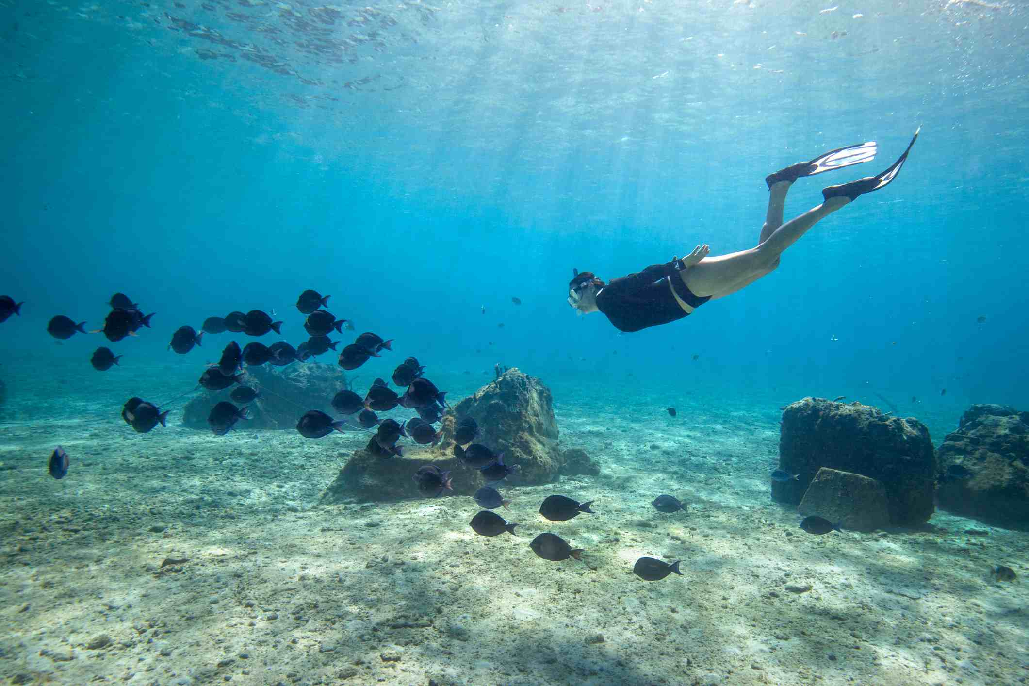 Snorkeling in Cozumel with school of fish