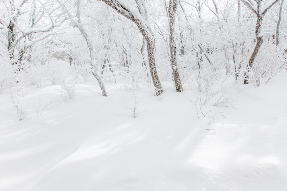 A blanket of fresh snow surrounds hiking trail