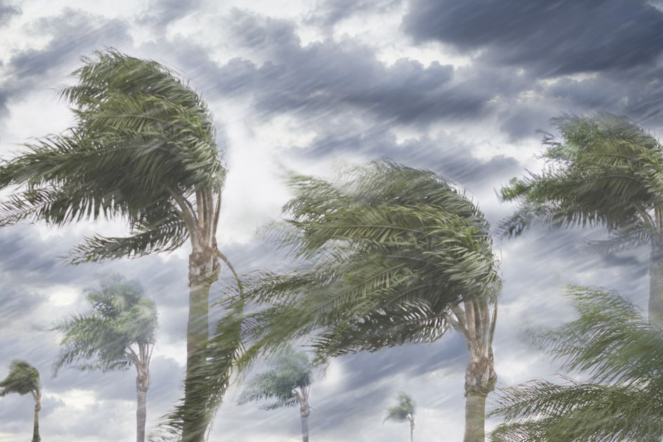 Rain and storm winds blowing trees