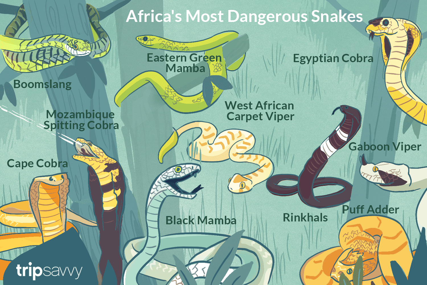 A Top 10 List Of Africas Most Dangerous Snakes