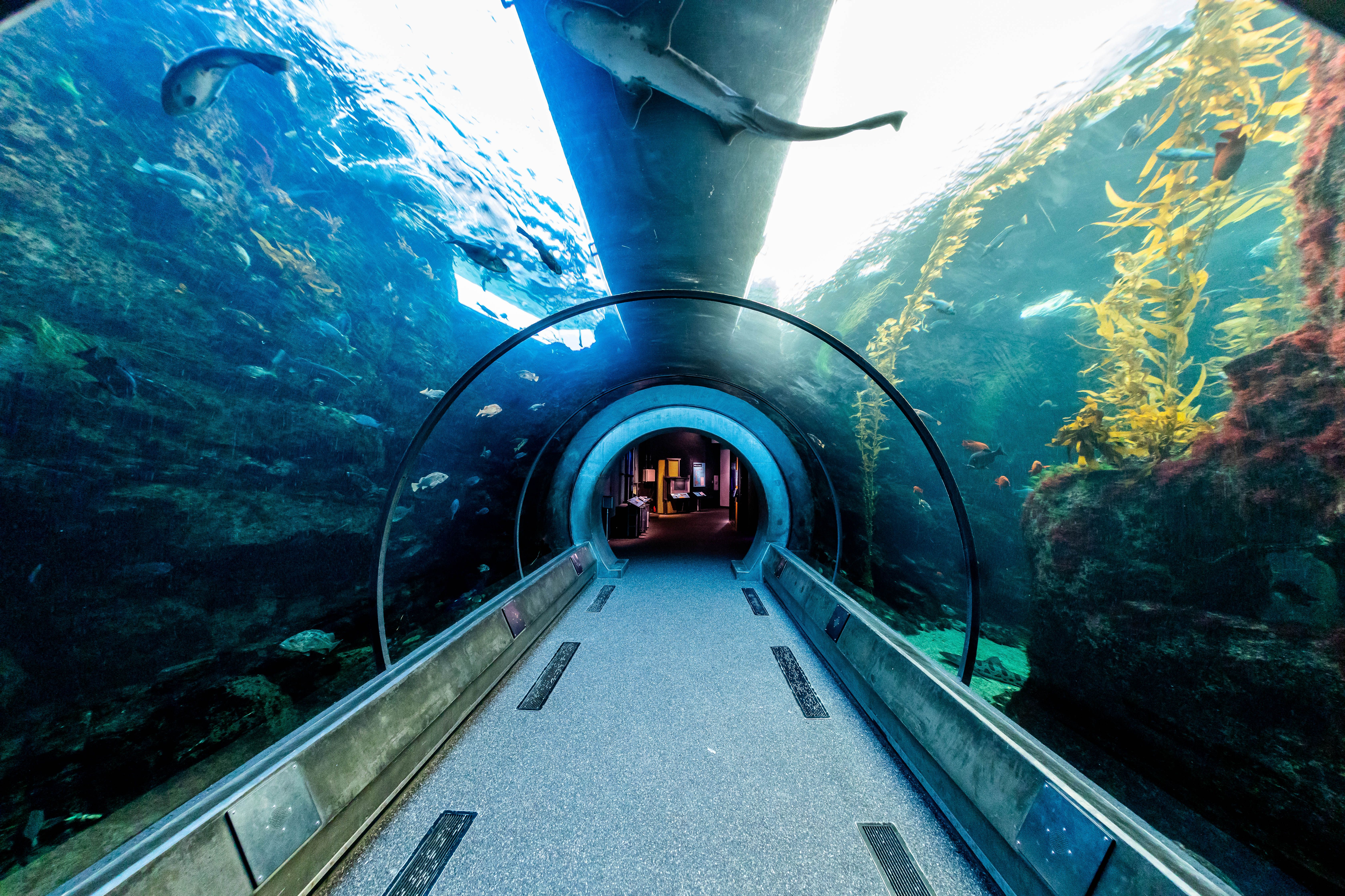 El túnel de vidrio en el acuario