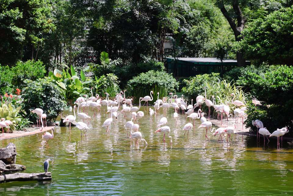 Flamingos in Kowloon Park.