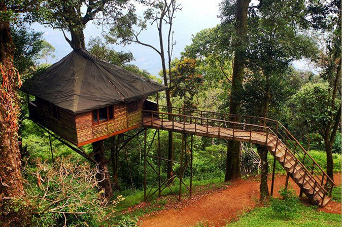 Tree House Resort For Nature Zone Resort 13 Top Tree House Hotels In India For All Budgets