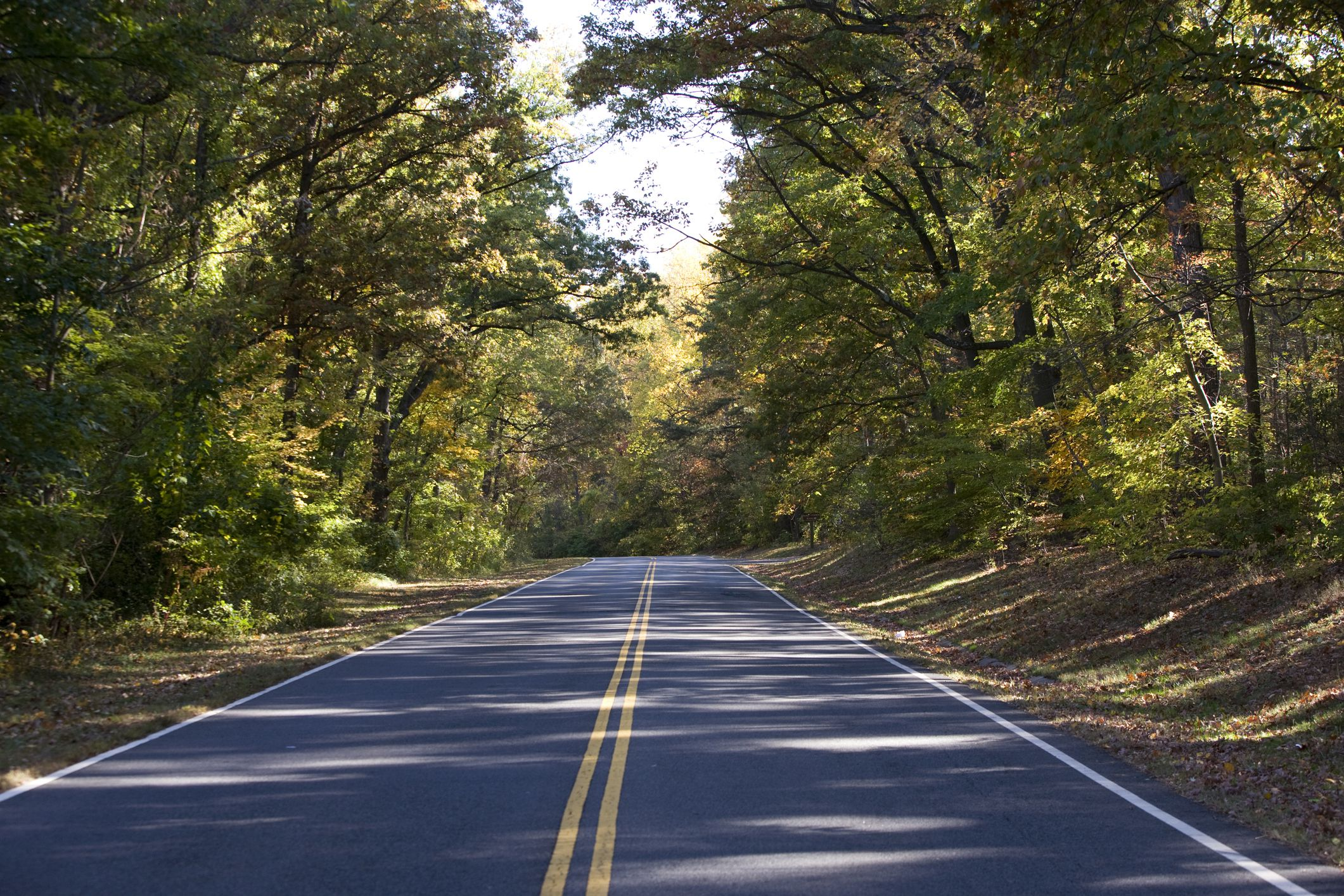 empty tree lined road through Fort Dupont Park