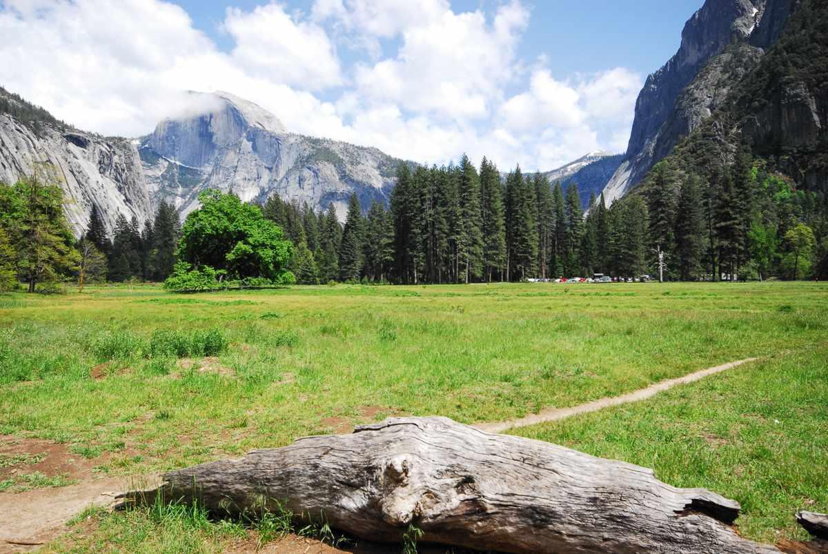Campo de hierba en Yosemite
