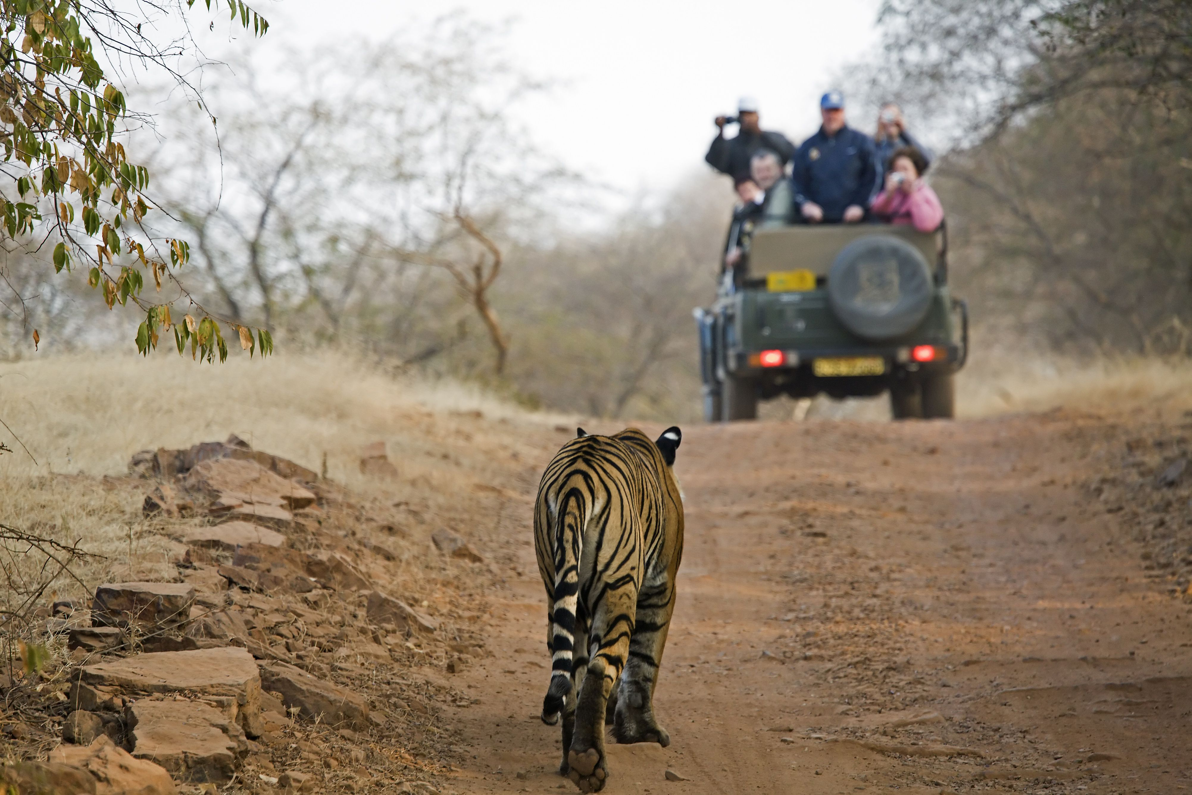 13 Top National Parks in India to Visit