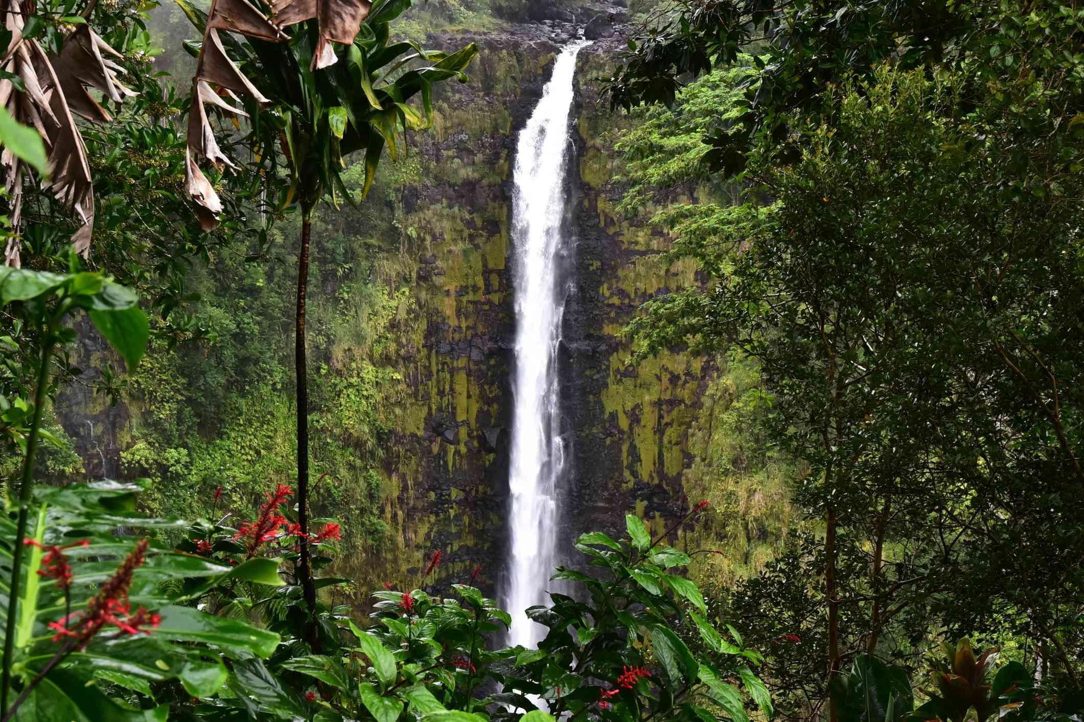 Akaka Falls on the Big Island, Hawaii