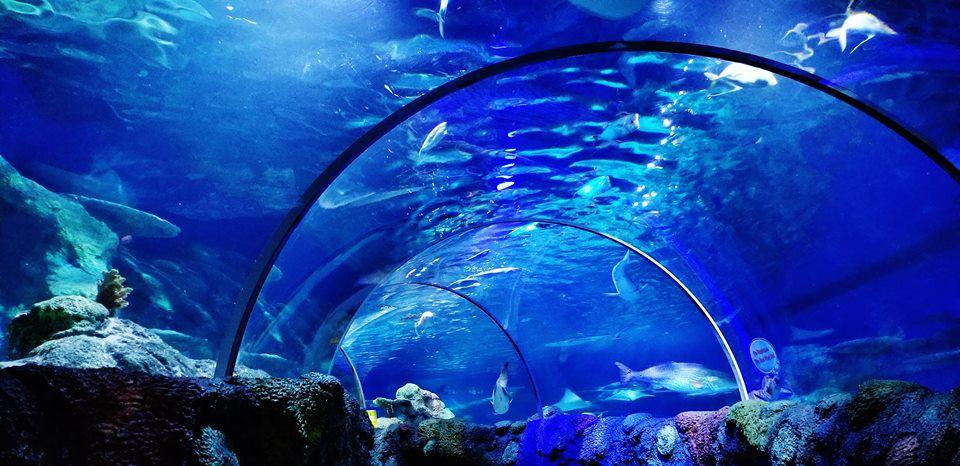 Tunnel at SEA LIFE Aquarium