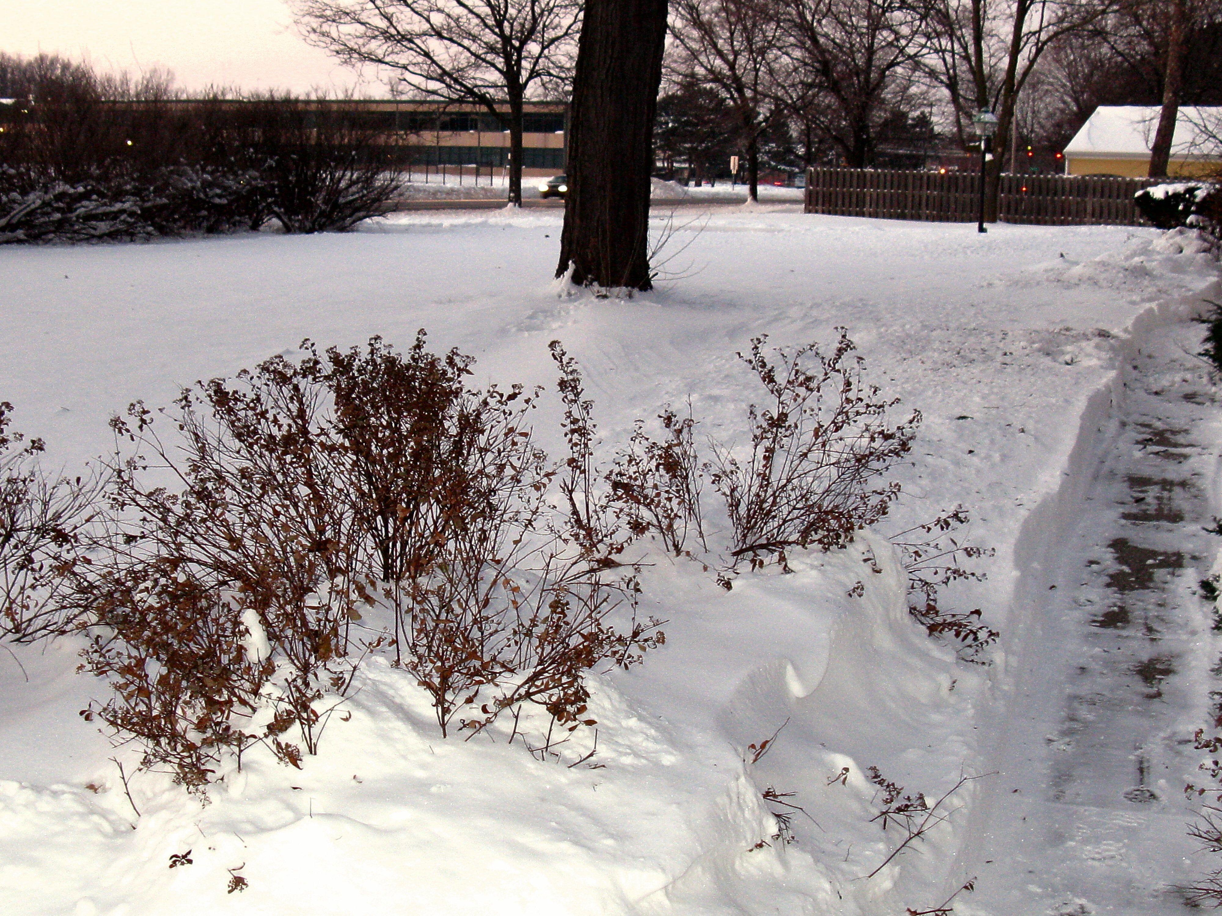 Snow in Metro Detroit