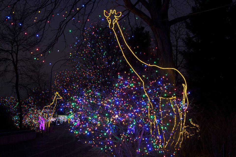 courtesy of the denver zoo - Best Christmas Lights Denver