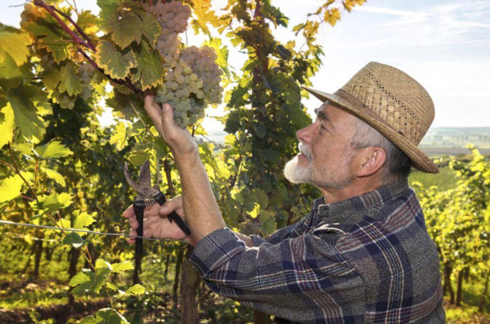 Private Irpinia Wine Tour