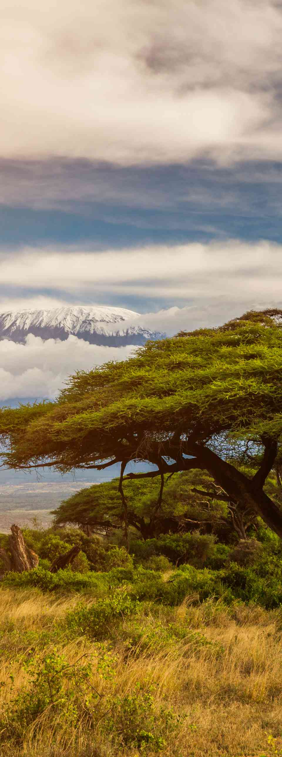 Mount Kilimanjaro, Amboseli, Kenya