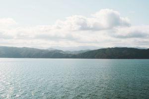 Rolling hills in Marlborough Bay