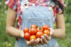 Farms and farmstands in San Jose and Silicon Valley