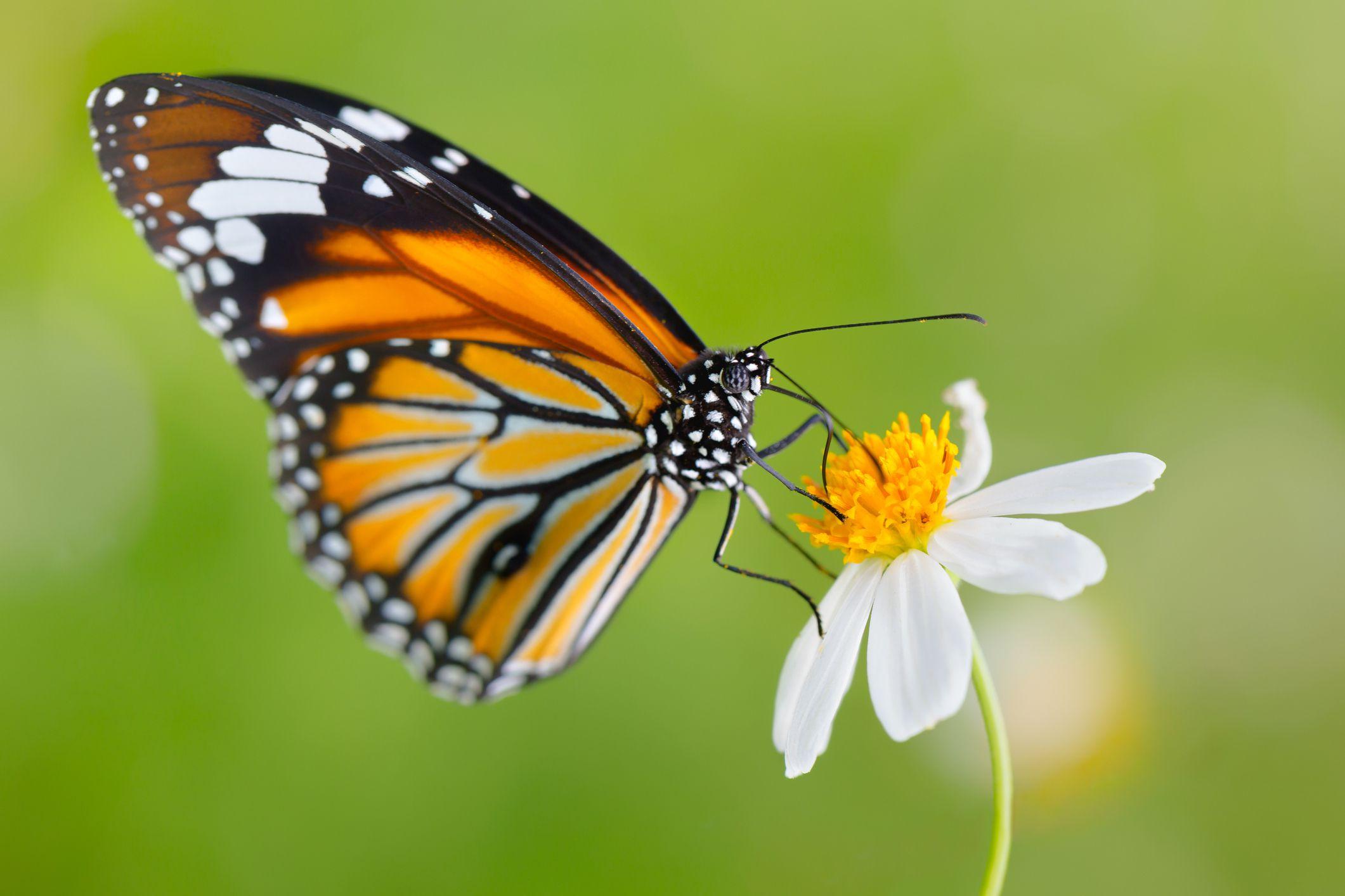 Montreal Botanical Garden: Butterflies Go Free Event