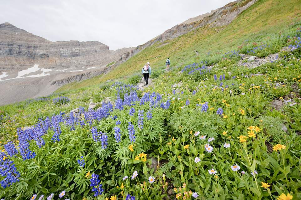 Two female hikers walk past a group of wildflowers on a hike up the Timpooneke Trail on Mt. Timpanogos, UT
