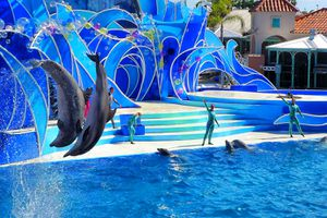 Watching a Show at Sea World is One of the top things to do in San Diego