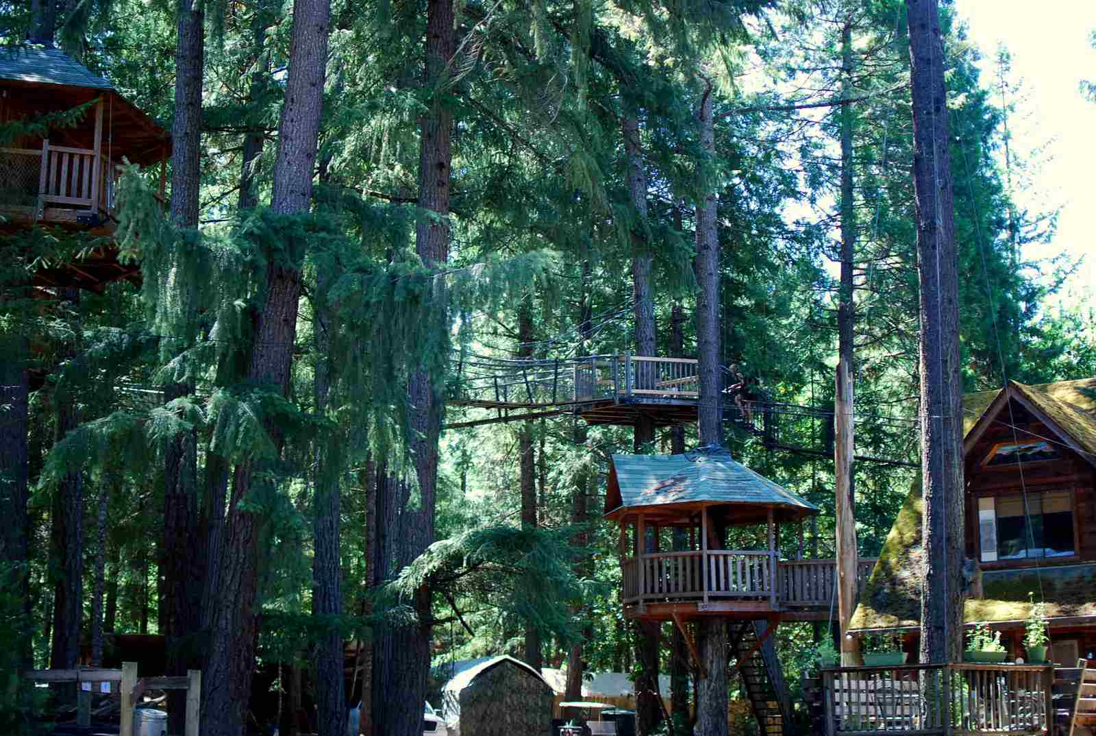 Deluxe treehouses fill a green Oregon forest at Out 'n' About Treesort