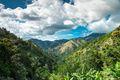 Jamaica's Blue Mountains