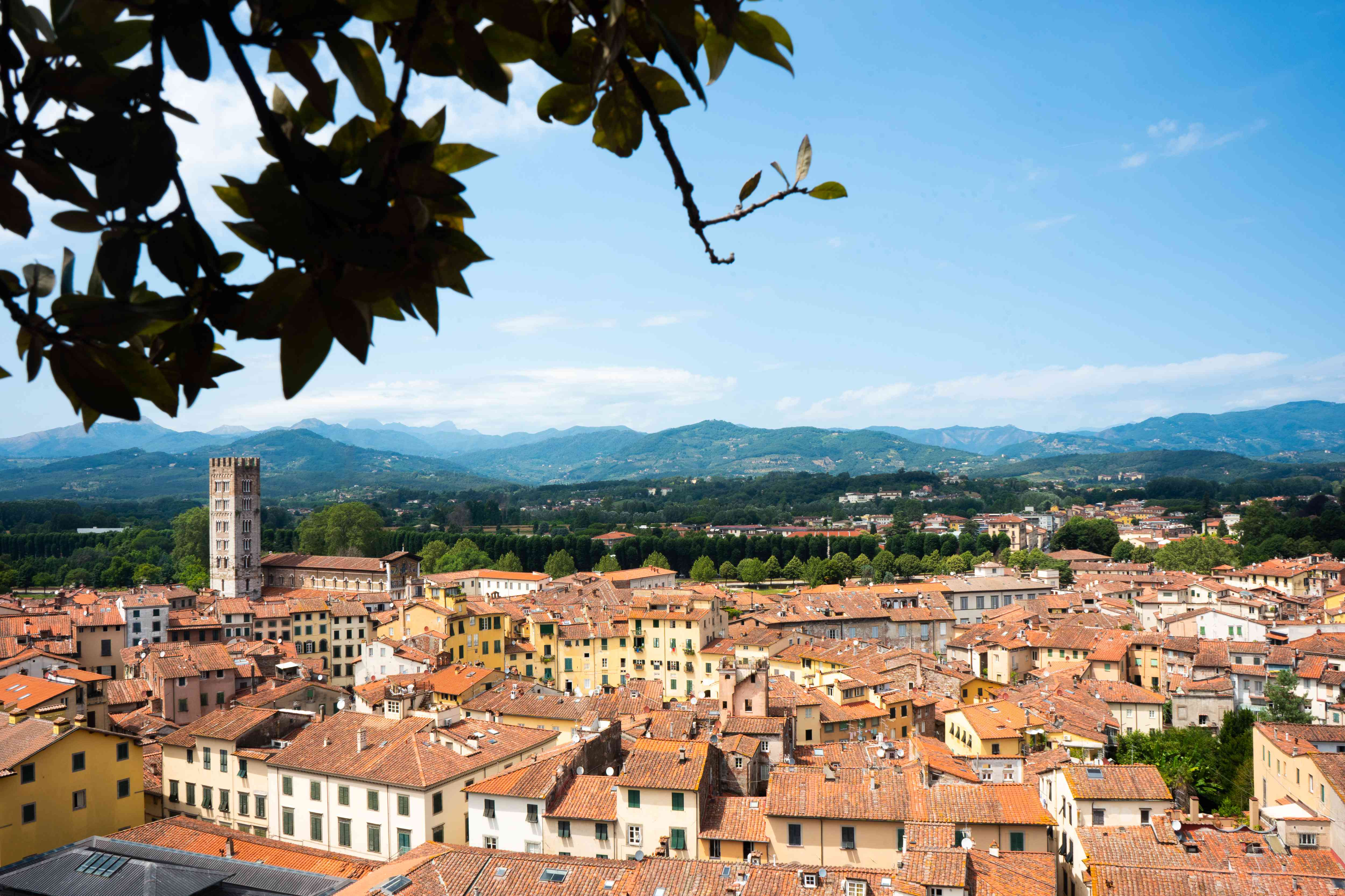 A view of the Lucca skyline from the Guinigi Tower