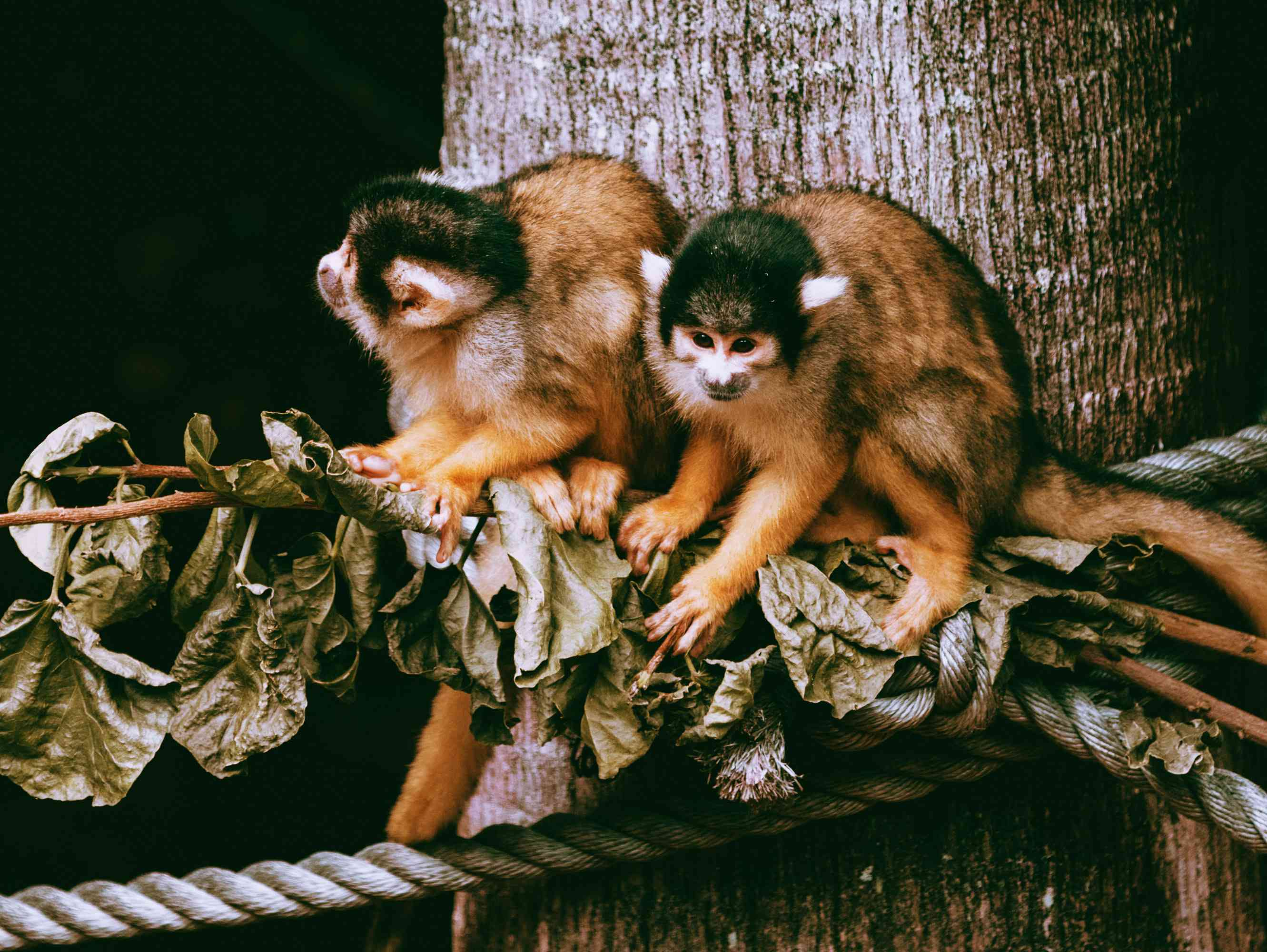 Monkeys at the Auckland Zoo