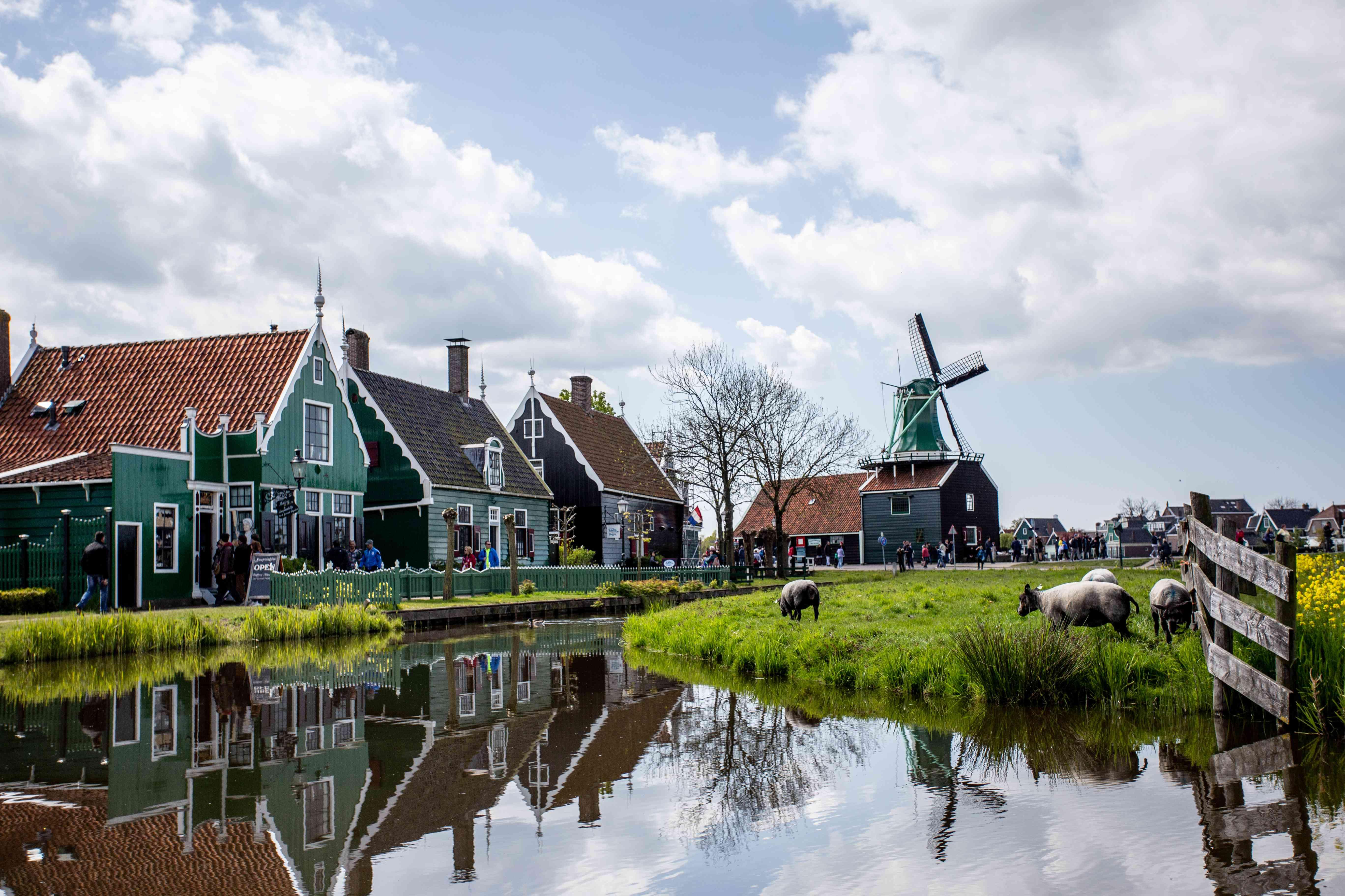 Molinos de viento y ganado en Zaanse Schans