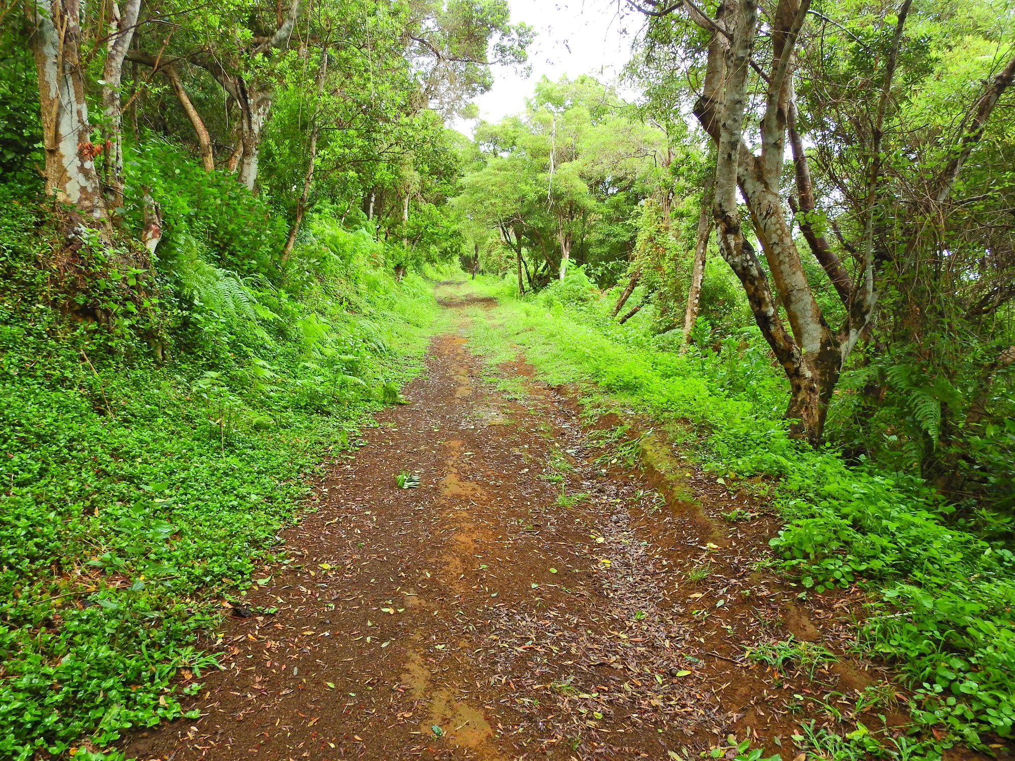 Monte Brasil hiking