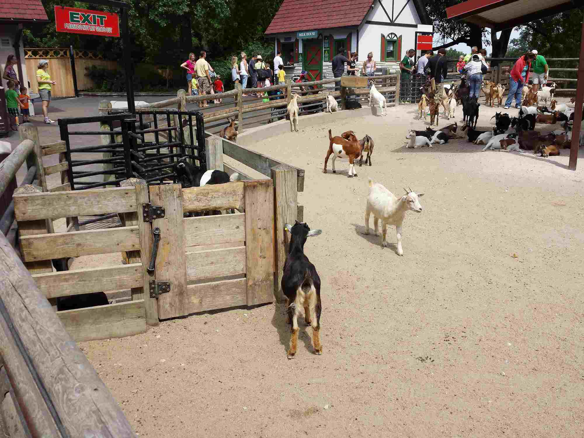 Animales en el parque de Grant