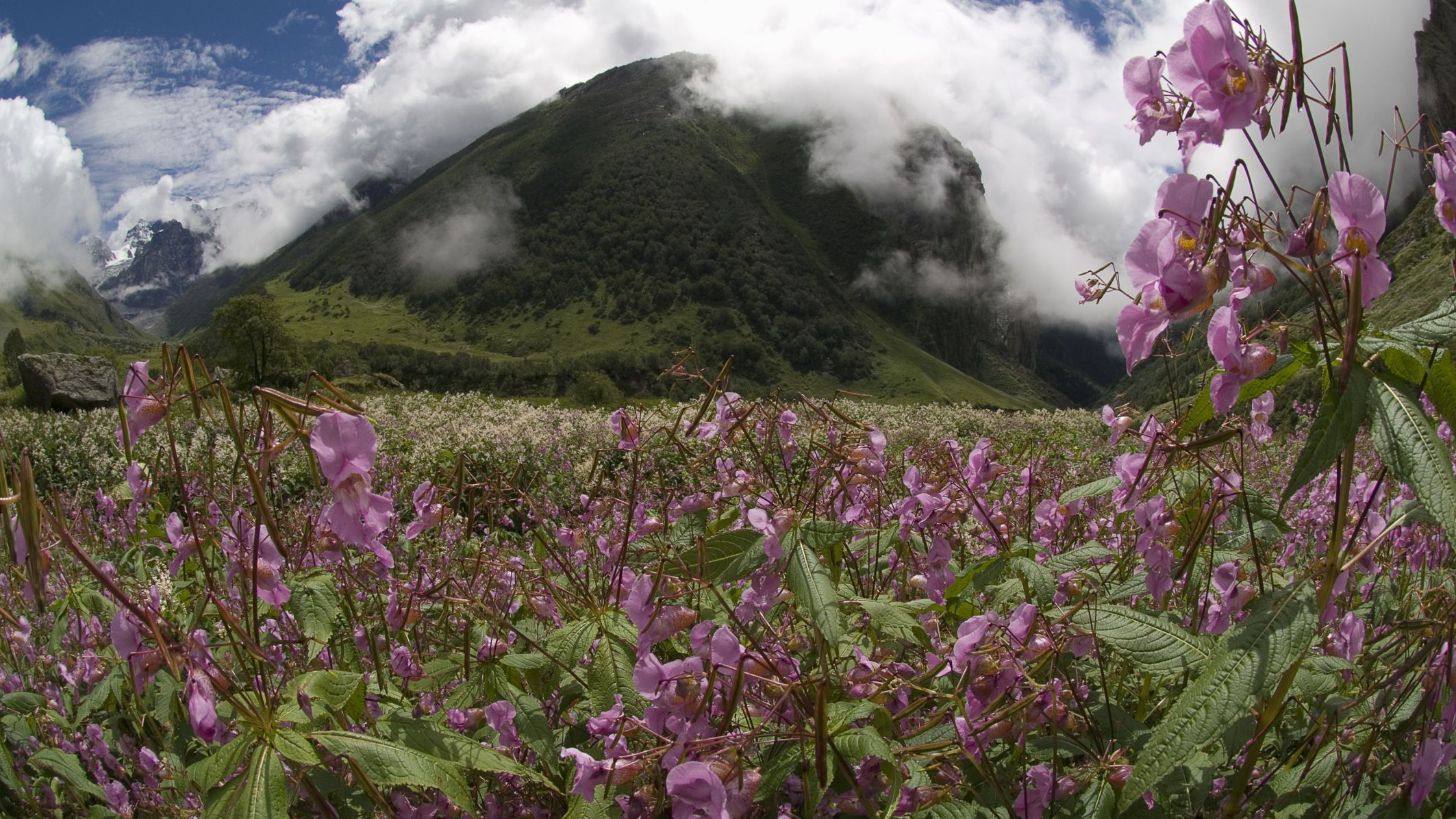 The Valley Of Flowers In India Essential Travel Guide