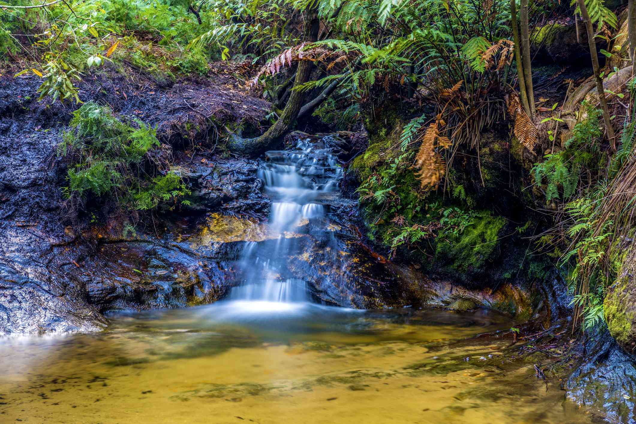 Small forest waterfall with a brown pond beneath it