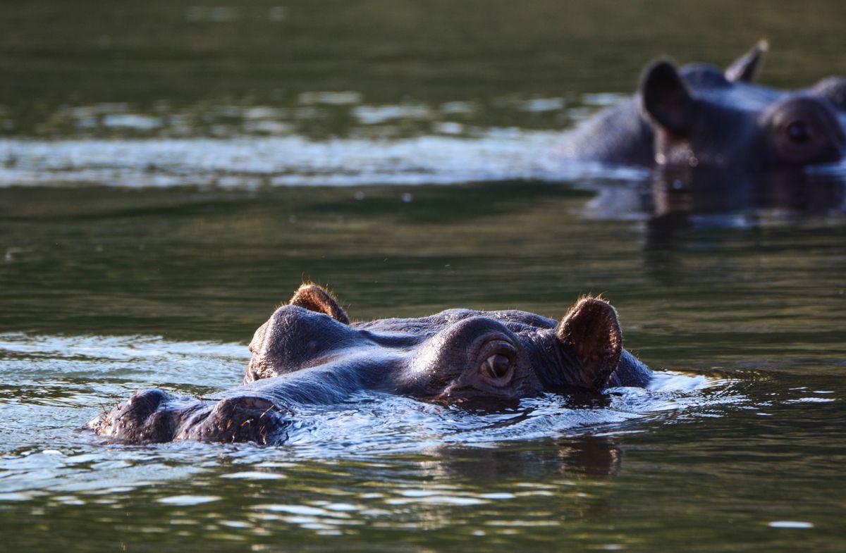Exploring Namibia's Spectacular Caprivi Strip Hippo