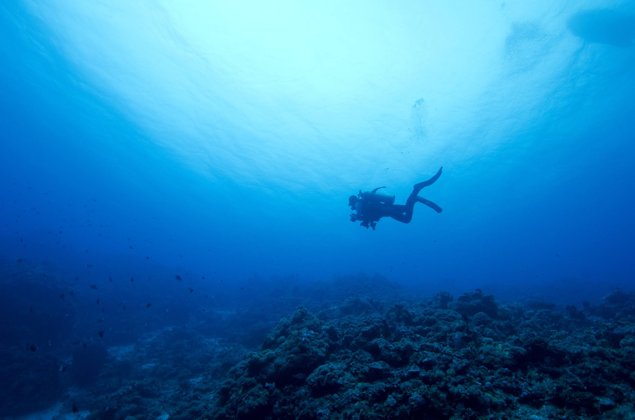 top 8 places to scuba dive in sabah borneo