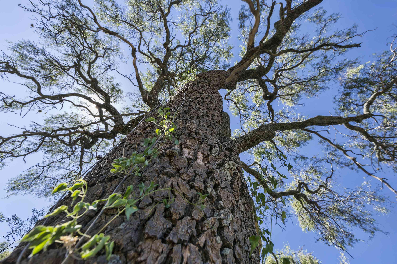 Bosque del Chaco