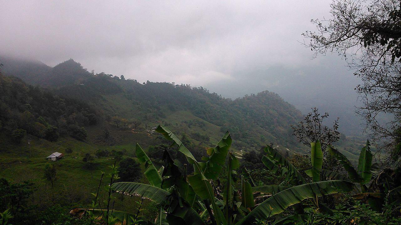 The Veracruz jungle in Mexico