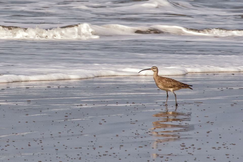 Bird on the Beach at Point Reyes
