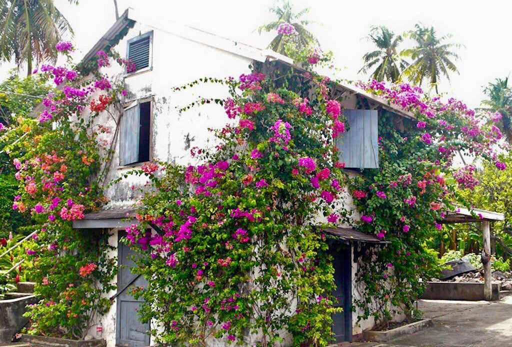 white buiding covered with pink flowering plants