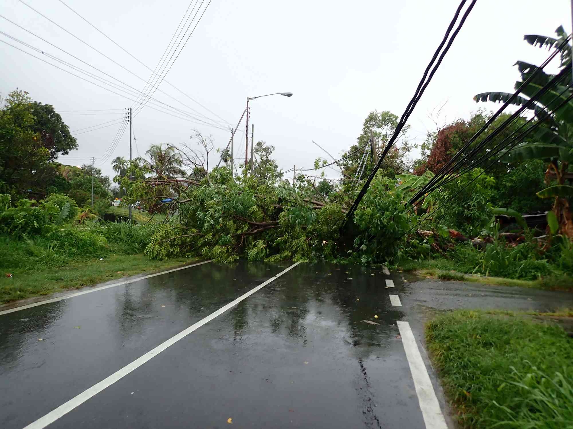 Fallen tree in Kota Kinabalu, Borneo