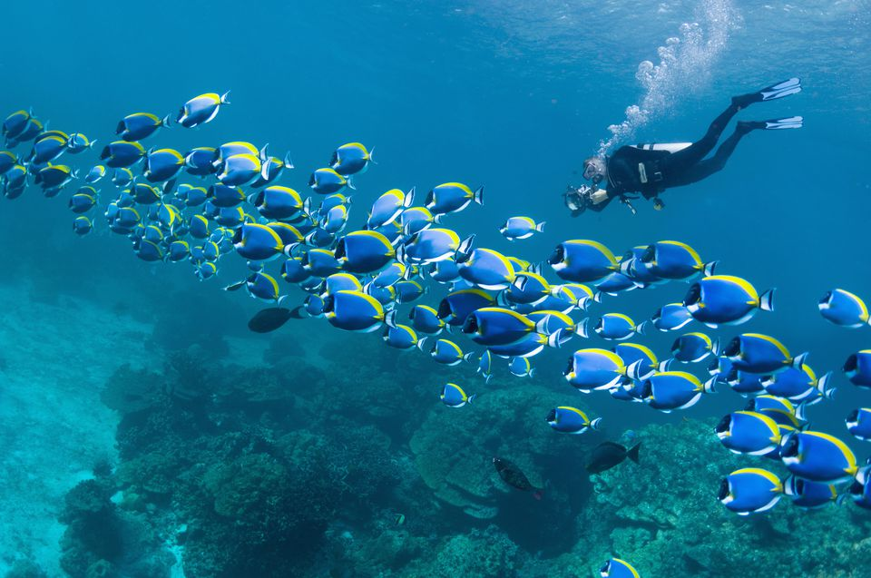 the world s best scuba diving destinations