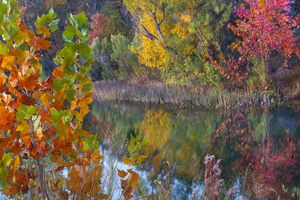 Sycamores and willows, Inks Lake, Texas, USA