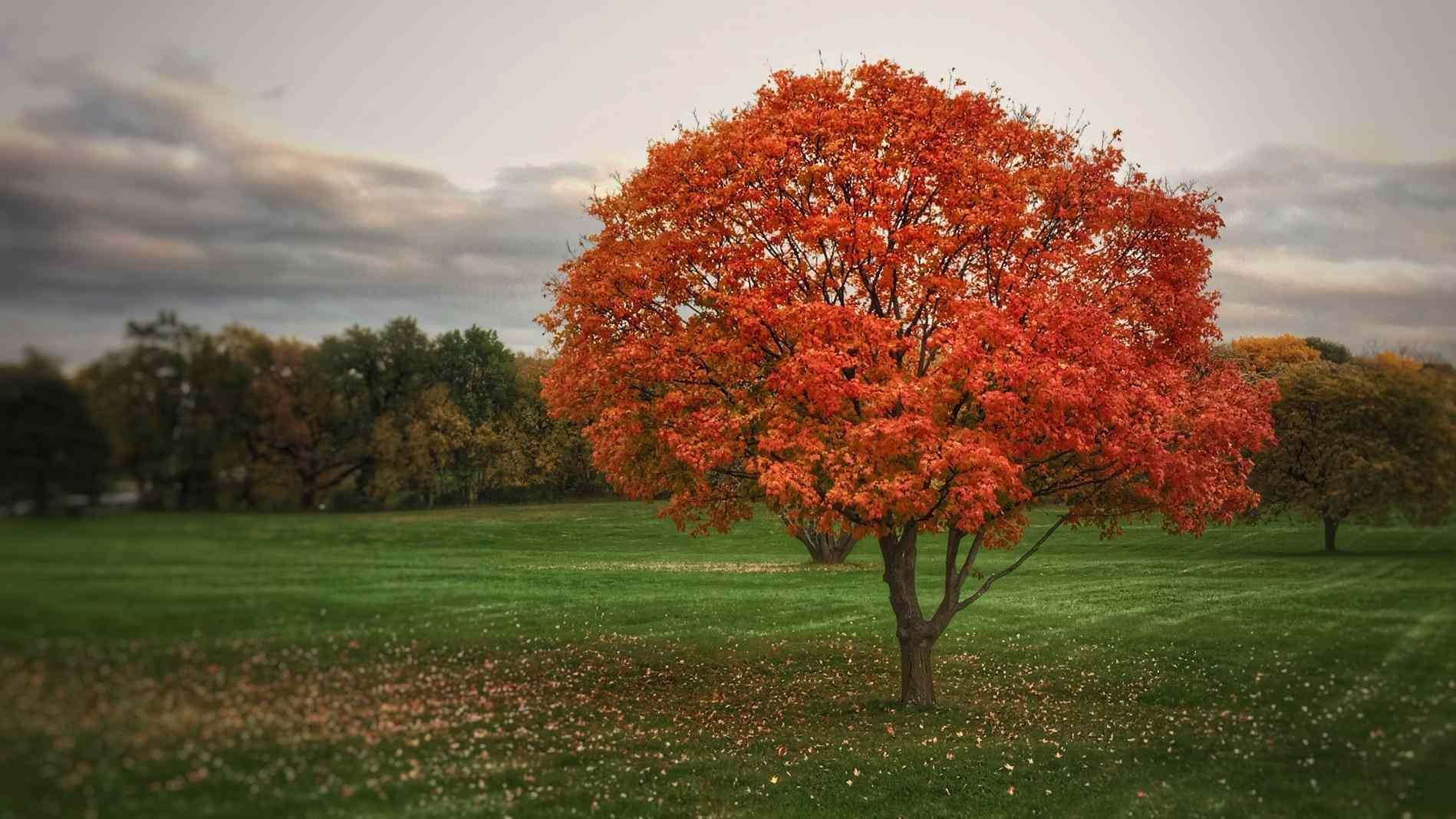 Fall foliage Omaha, Nebraska